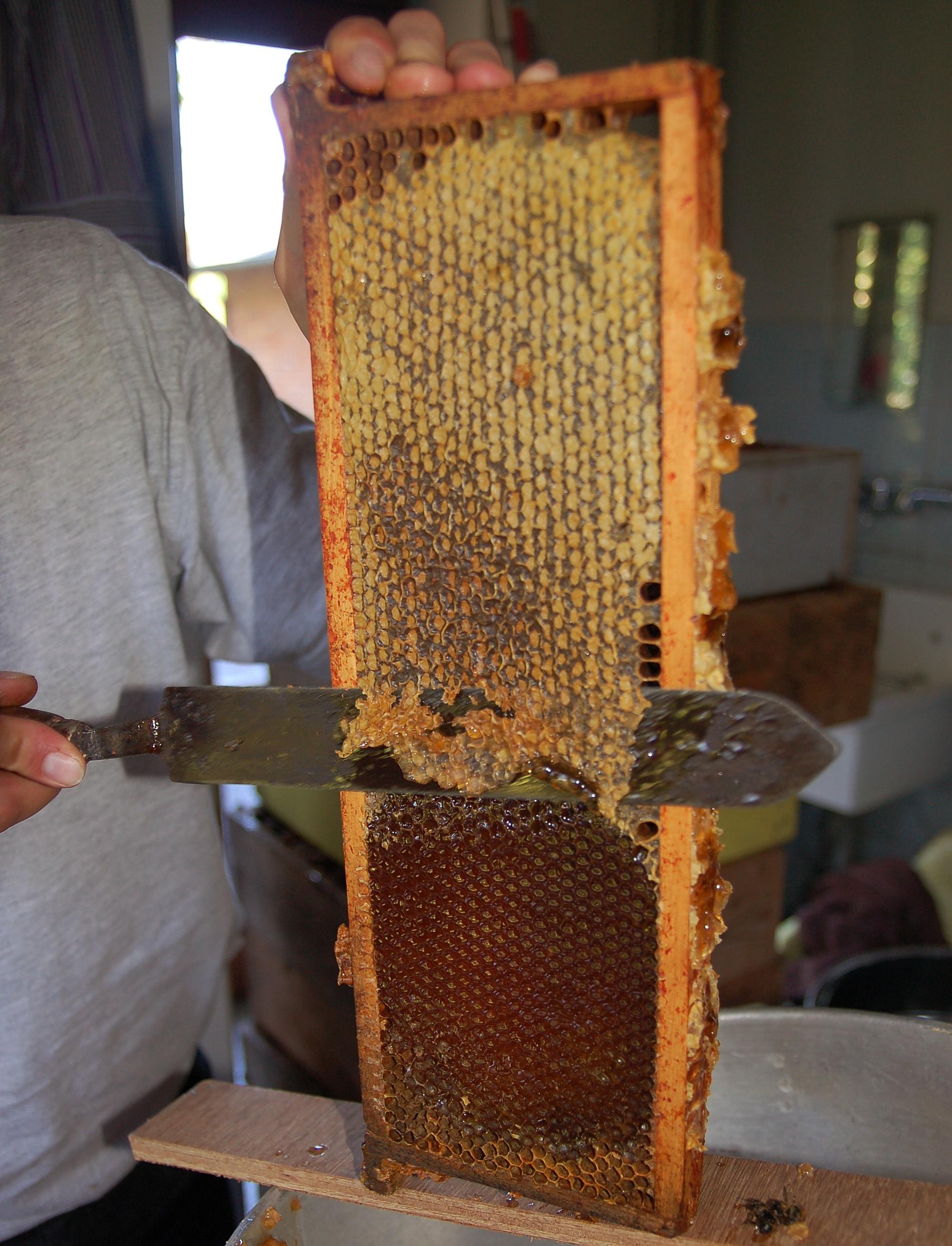 Контейнер для сбора пчелиной пыльци своими руками