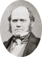Studio photo showing Darwin's characteristic large forehead and bushy eyebrows with deep set eyes, pug nose and mouth set in a determined look. He is bald on top, with dark hair and long side whiskers but no beard or moustache.