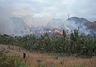 Illegal slash and burn in Madagascar