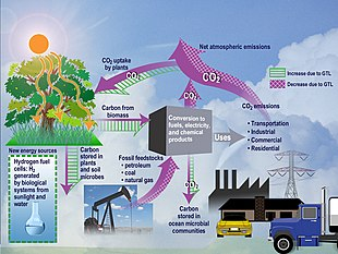 Diagram showing the flow of CO2 in an ecosystem