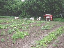 Beehives in a planted field