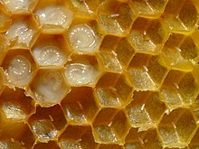 Full (with larvae) and empty (with eggs) honeycomb cells