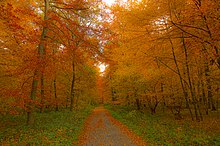 Forest path flanked with young trees in autumn colors