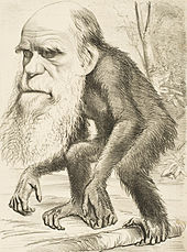 White bearded head of Darwin with the body of a crouching ape.