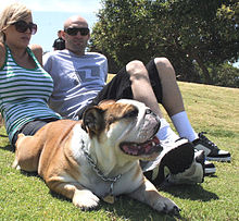 Couple sitting on the lawn with a pet British Bulldog