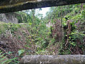 Hanover Jamaica 5 photo d ramey logan.jpg