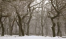 Group of bare trees on a snowy day