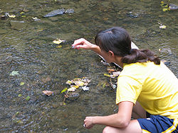 A woman takes samples of water from a river.